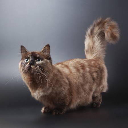 Pixwords L`image avec chat, animal Ekaterina Cherkashina